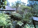 Через пол-Земли - за экзотикой Бали / Индонезия