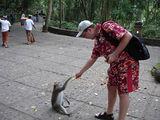 обезьянки гуляют рядом с посетителями / Индонезия