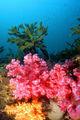 Осень под водой / Фото из Южной Кореи