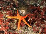 Подводный мир / Фото из Южной Кореи