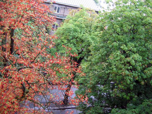 Вид из окна / Фото из Норвегии