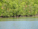 мангровые реки / Малайзия