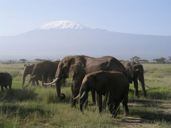 Амбосели. Снега Килиманджаро (на границе с Танзанией) / Фото из Кении