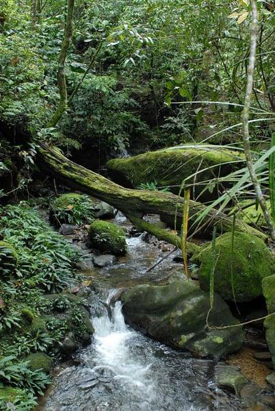 Непроходимые леса / Фото из Малайзии