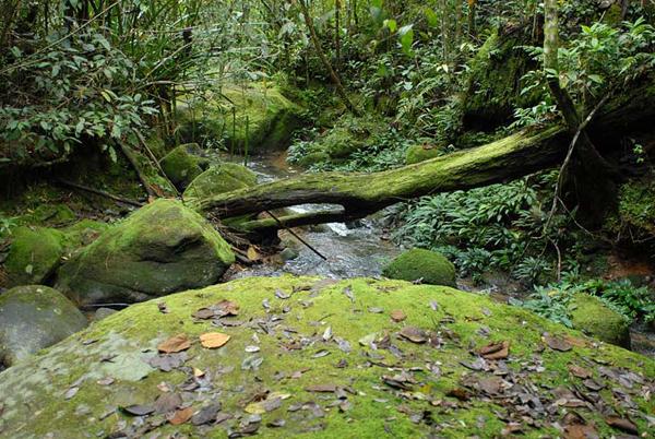 Буйная растительность / Фото из Малайзии