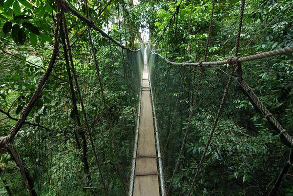 Очередной подвесной мост / Фото из Малайзии