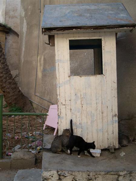 Кошкам границы нипочем / Фото с Кипра