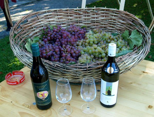 Chasselas - самый популярный виноград в Лаво / Фото из Швейцарии