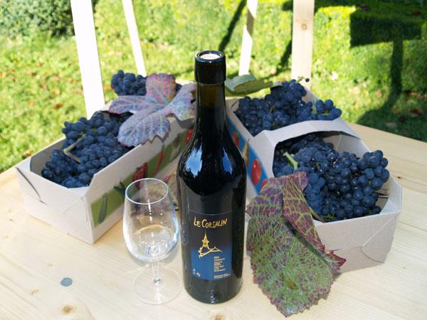 Pinot Noir - еще один популярный сорт винограда в Лаво / Фото из Швейцарии