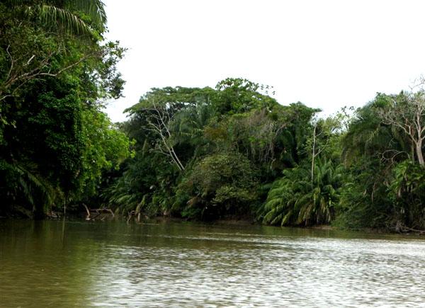 Берега реки Рио-Фрио / Фото из Коста-Рики