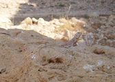 Типичный обитатель Иордании / Иордания
