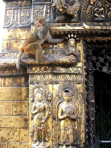 Обезьянка на стене храма / Фото из Непала