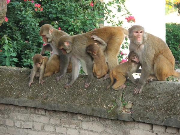 Семья обитателей храма / Фото из Непала