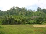 опушка тропического леса / Индия