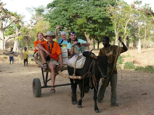 По Стране догонов можно путешествовать на пристяжных зебу / Фото из Мали