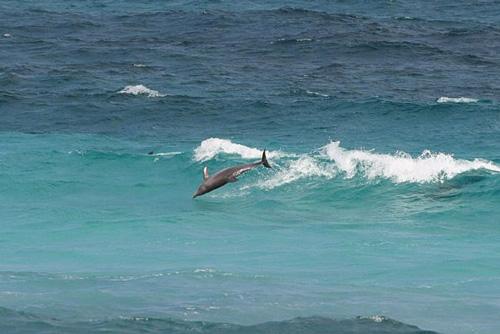 Дельфины - частые гости Сокотры / Йемен