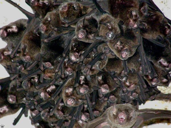 Летучие мыши в национальном парке, Венесуэла / Фото из Венесуэлы