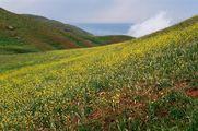 Бешбармаг цветет / Азербайджан