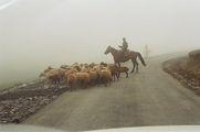 чобан из тумана / Азербайджан