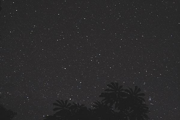 Звездная ночь в джунглях Эквадора / Фото из Эквадора