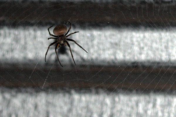 А этот - висел под крышей / Фото из Эквадора
