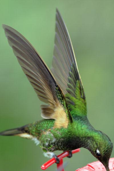 "Момент ""стопора"" крыла / Фото из Эквадора"