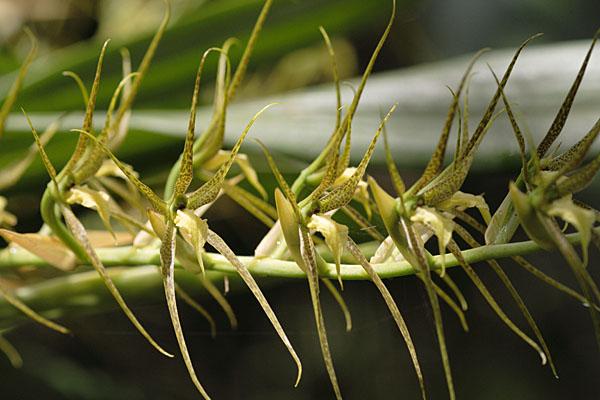 Как зовут эту орхидею - я даже не могу предположить / Фото из Эквадора