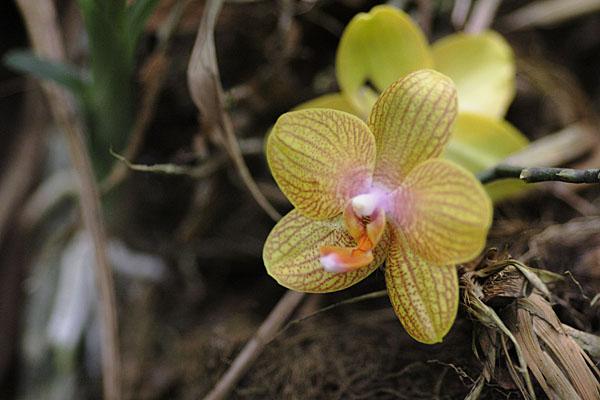 Орхидеи Эквадора / Фото из Эквадора