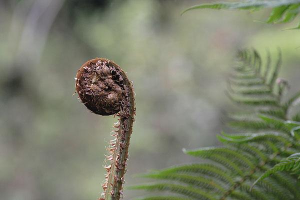 Причудливые формы природы Эквадора / Фото из Эквадора