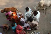 коровы и люди / Индия