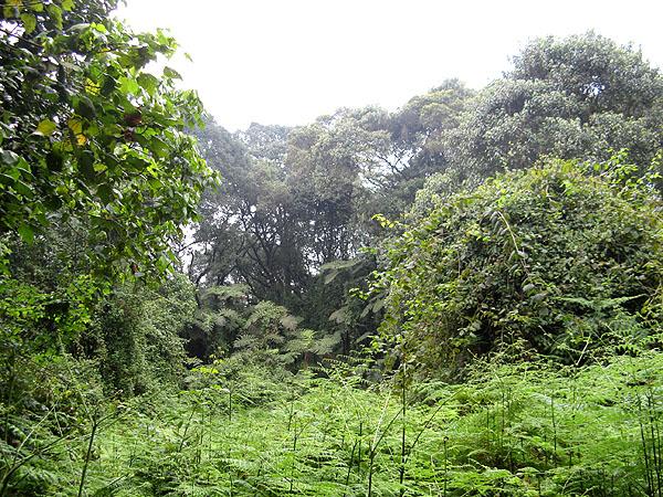 """Джунгли в начале пути на """"крышу Африки"""" / Фото из Танзании"""