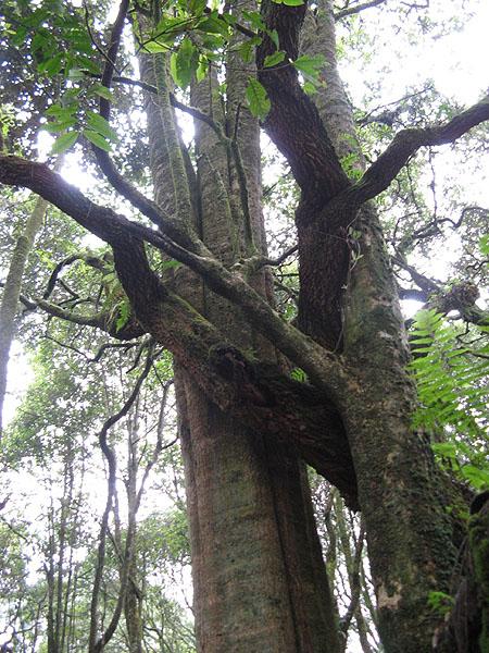 Причудливые переплетения ветвей, Килиманджаро / Фото из Танзании