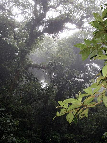 Облачный лес Монтеверде покрыт густым утренним туманом  / Фото из Коста-Рики