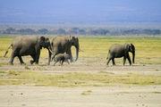 Мое второе пришествие в Кению / Кения