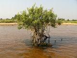 мангровые заросли / Россия