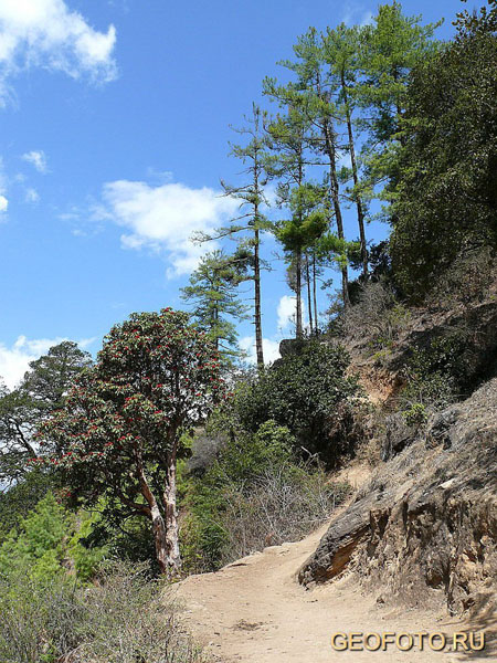 Дорога к монастырю Таксанг / Фото из Бутана