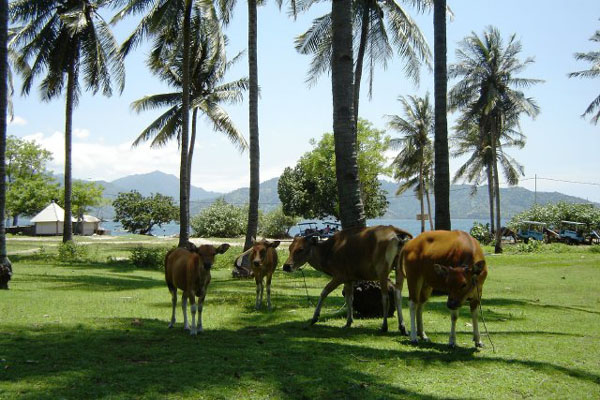 Остров Гили-Эйр / Фото из Малайзии