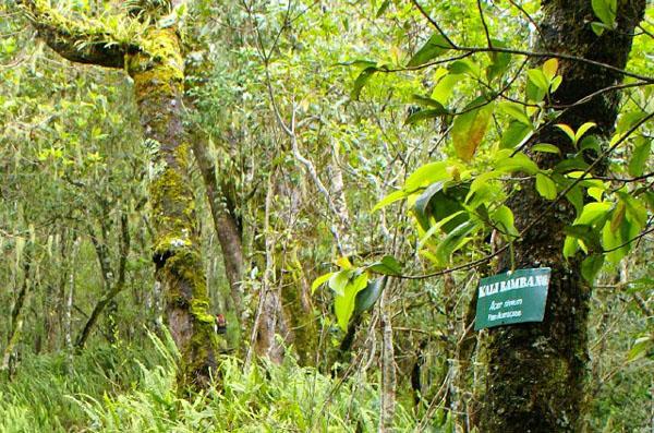 Таблички на деревьях в предгорьях вулкана Ринджани / Фото из Малайзии