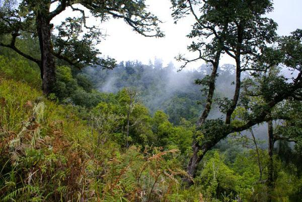 Джунгли  в предгорьях вулкана Ринджани / Фото из Малайзии