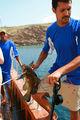 Джибути: поездка за китовыми акулами / Джибути