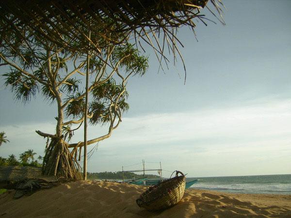 Шри-Ланка - окно в вечное лето / Фото со Шри-Ланки
