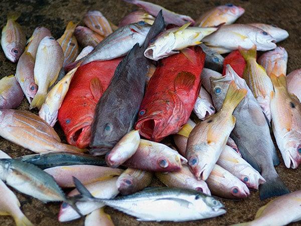 Рыбный рынок понадобится туристам скорее как музей / Фото со Шри-Ланки