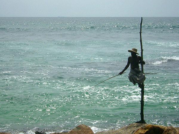 Шри-ланкийское ноу-хау - рыбная ловля на шесте / Фото со Шри-Ланки