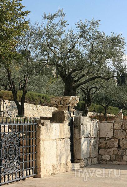В Иерусалиме каждый найдет для себя интересное / Фото из Израиля