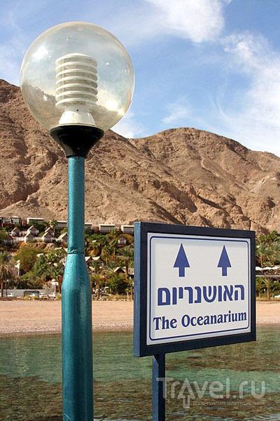 Океанариум в Эйлате очень понравится детям / Фото из Израиля