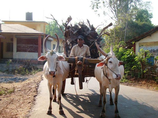 Трудяга в Индии / Фото из Индии