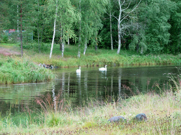 Безмятежное утро в Палтамо / Фото из Финляндии