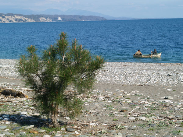 Берег Пицунды / Фото из Абхазии