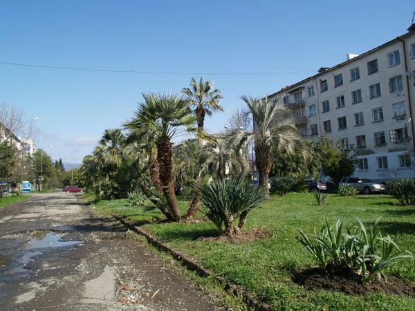 Парк возле набережной в Сухуме / Фото из Абхазии