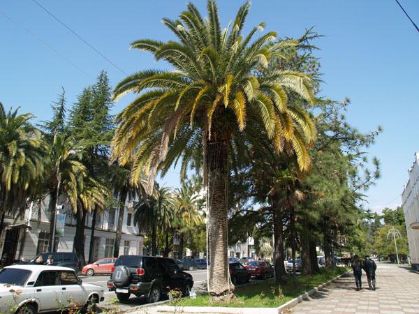 В центре Сухума / Фото из Абхазии